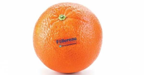 Montez votre Opération Oranges de Noël pour les chrétiens d'Egypte