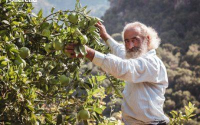 Revenir sur ses terres – Liban