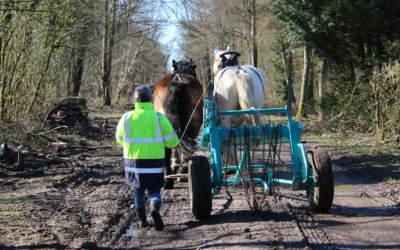 France : Connaissez-vous le débardage à cheval ?